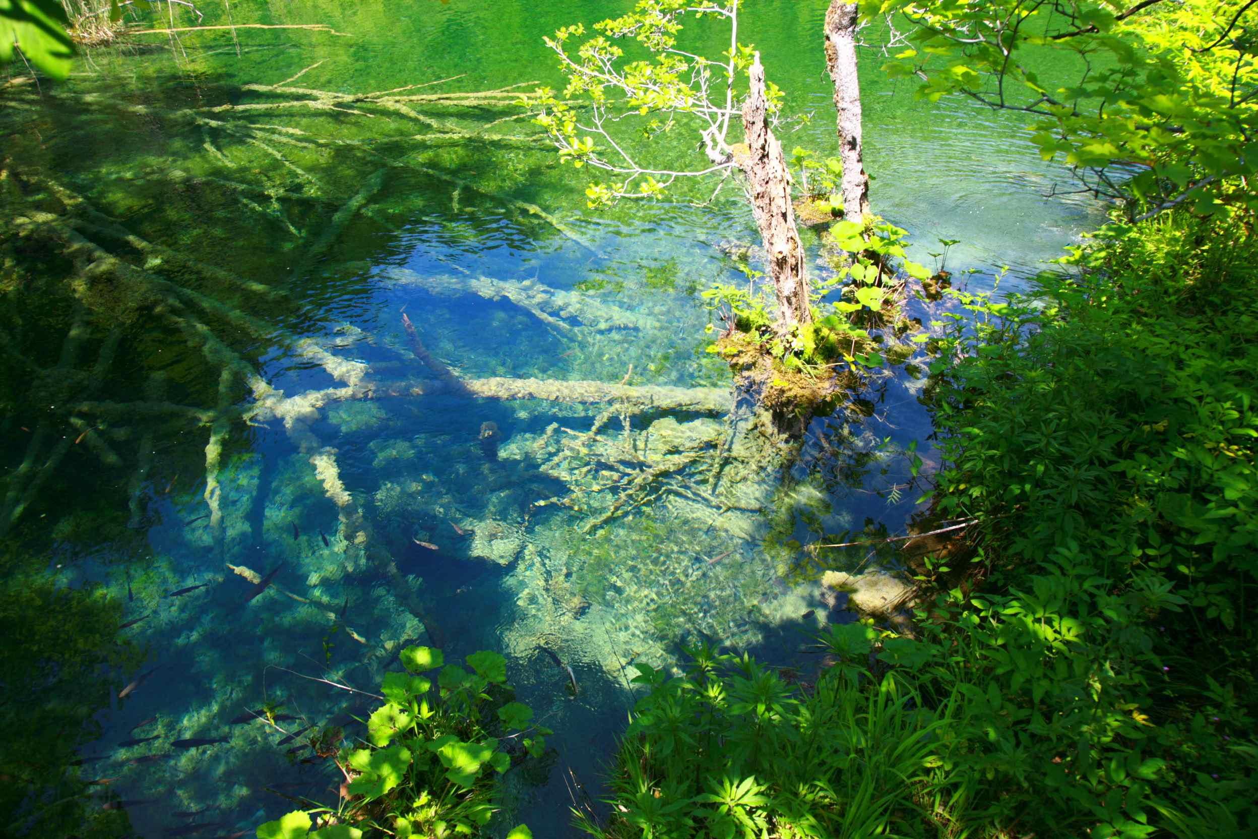 プリトヴィツェ湖群国立公園の画像 p1_38